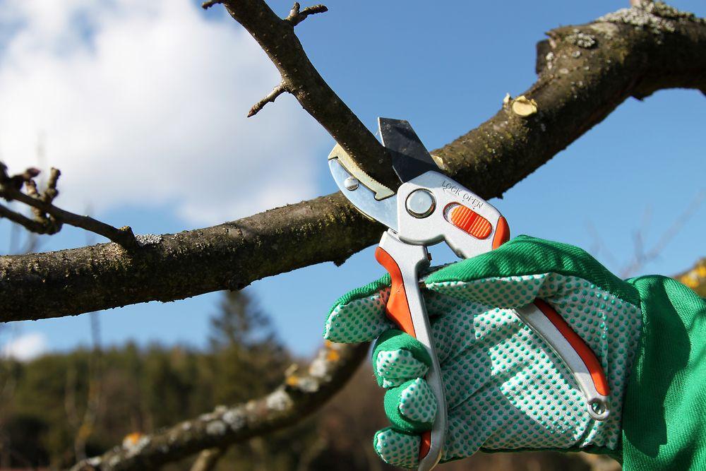 Зачем проводят обрезку деревьев и кустарников